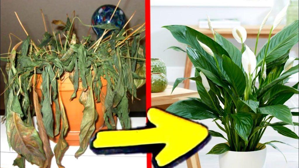 trucos y secretos para las plantas
