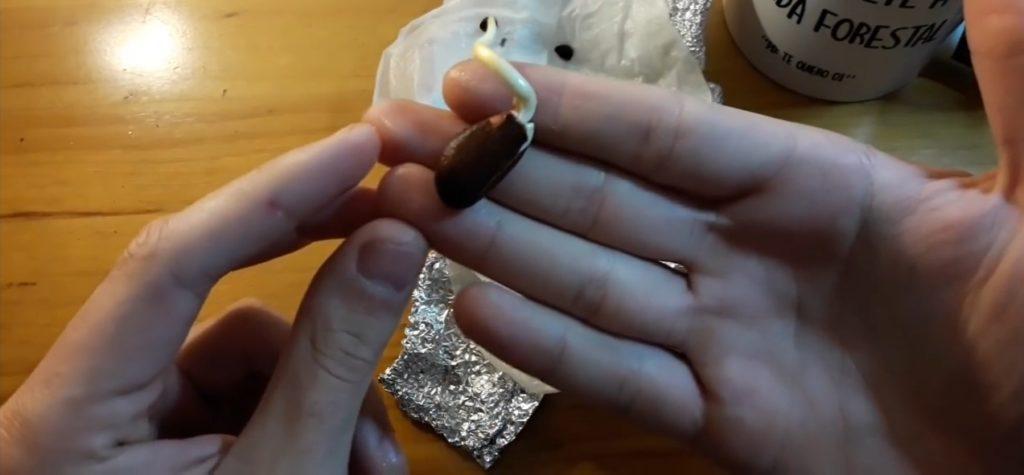almendra germinada con raíz