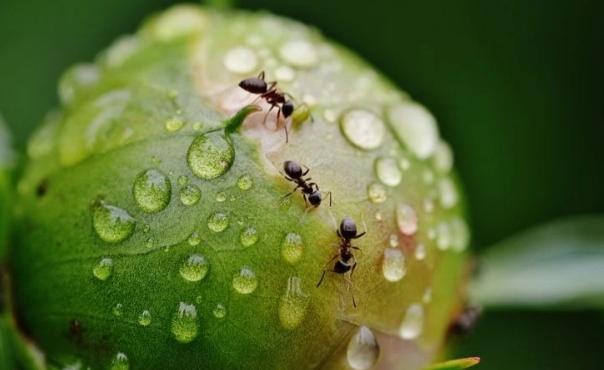 remedio casero con naranja para eliminar hormigas