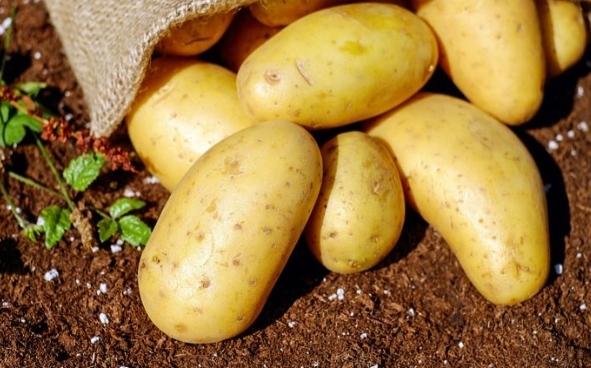 patatas para hacer un fertilizante casero